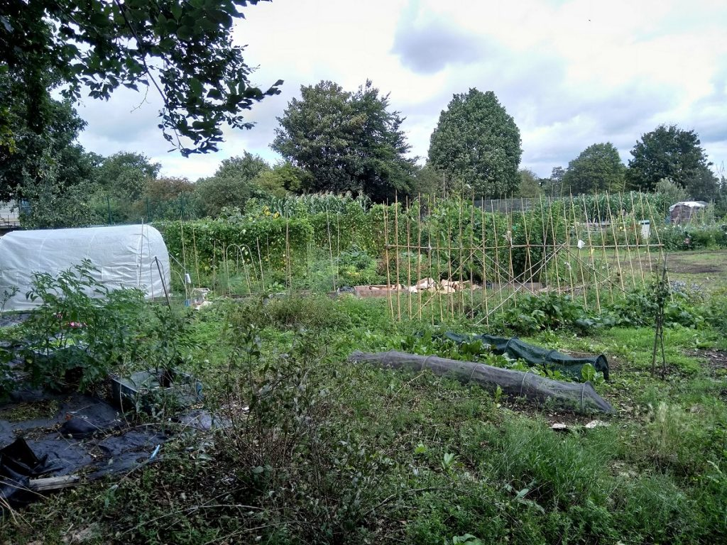 Goat Lane is one of Enfield Council's many allotment sites