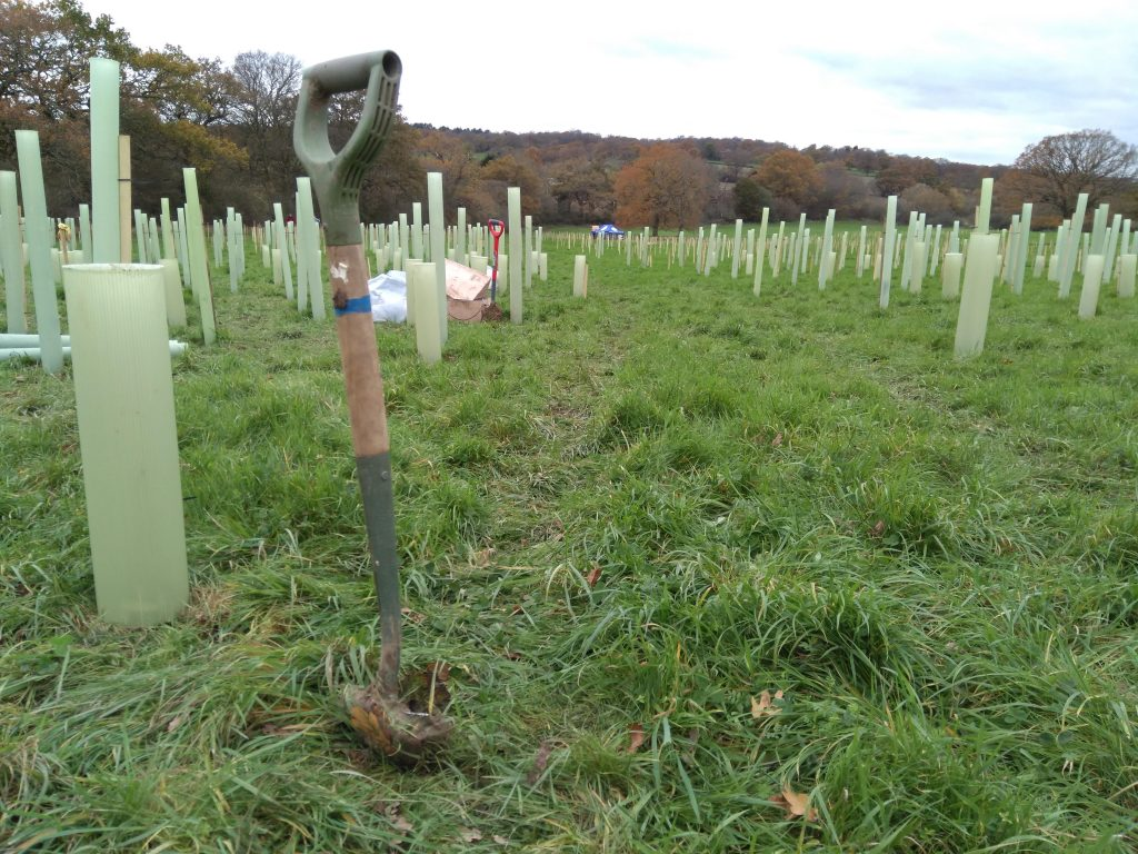 Work on planting 100,000 new trees in the north of the borough began in November